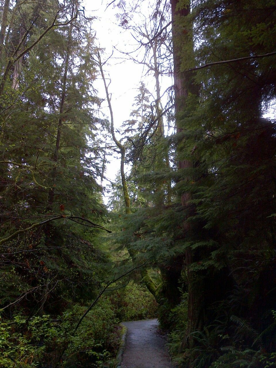 Trees in Stanley Park