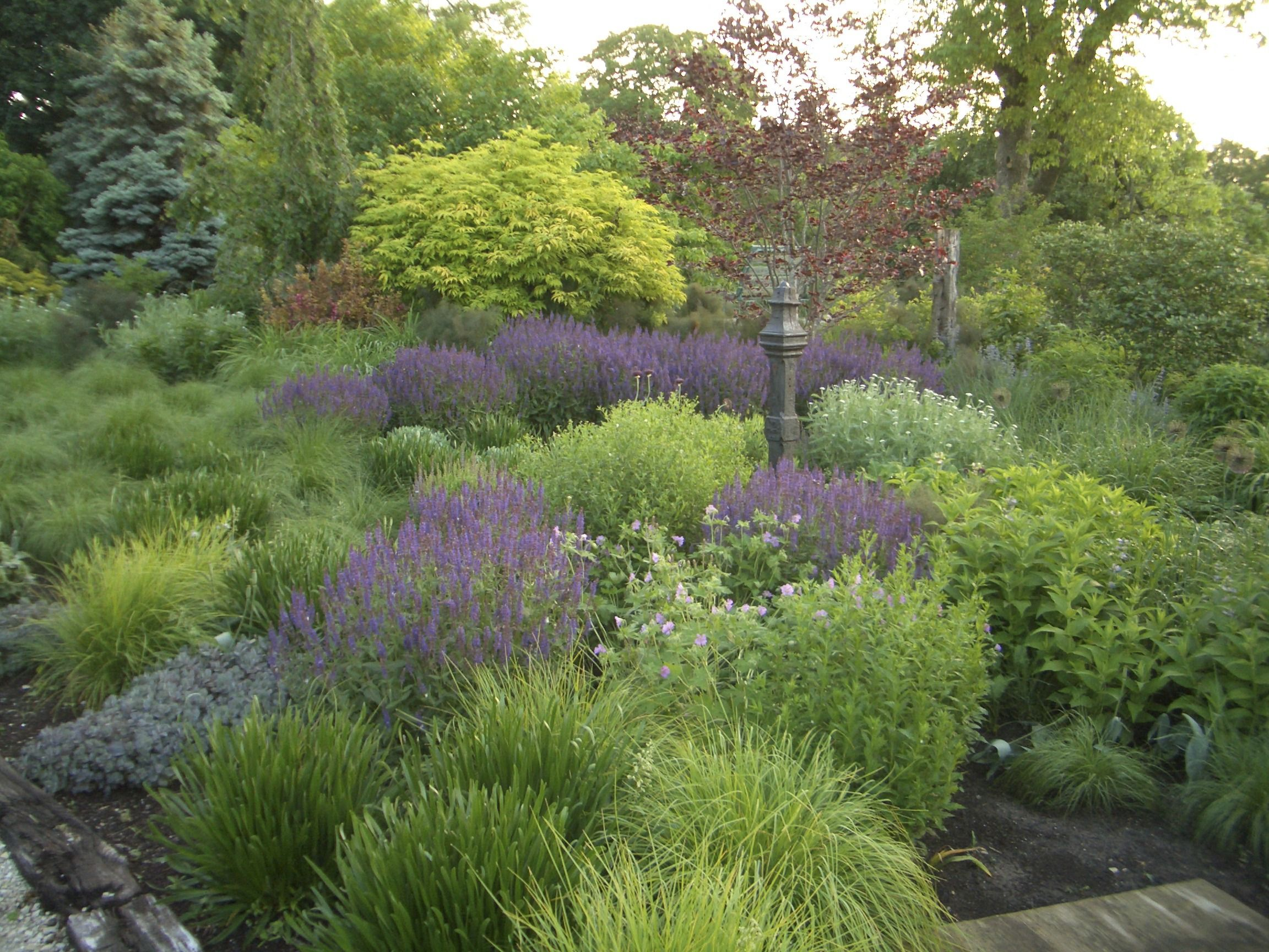 Want a gorgeous easy care garden check out the know for Easy maintenance perennials