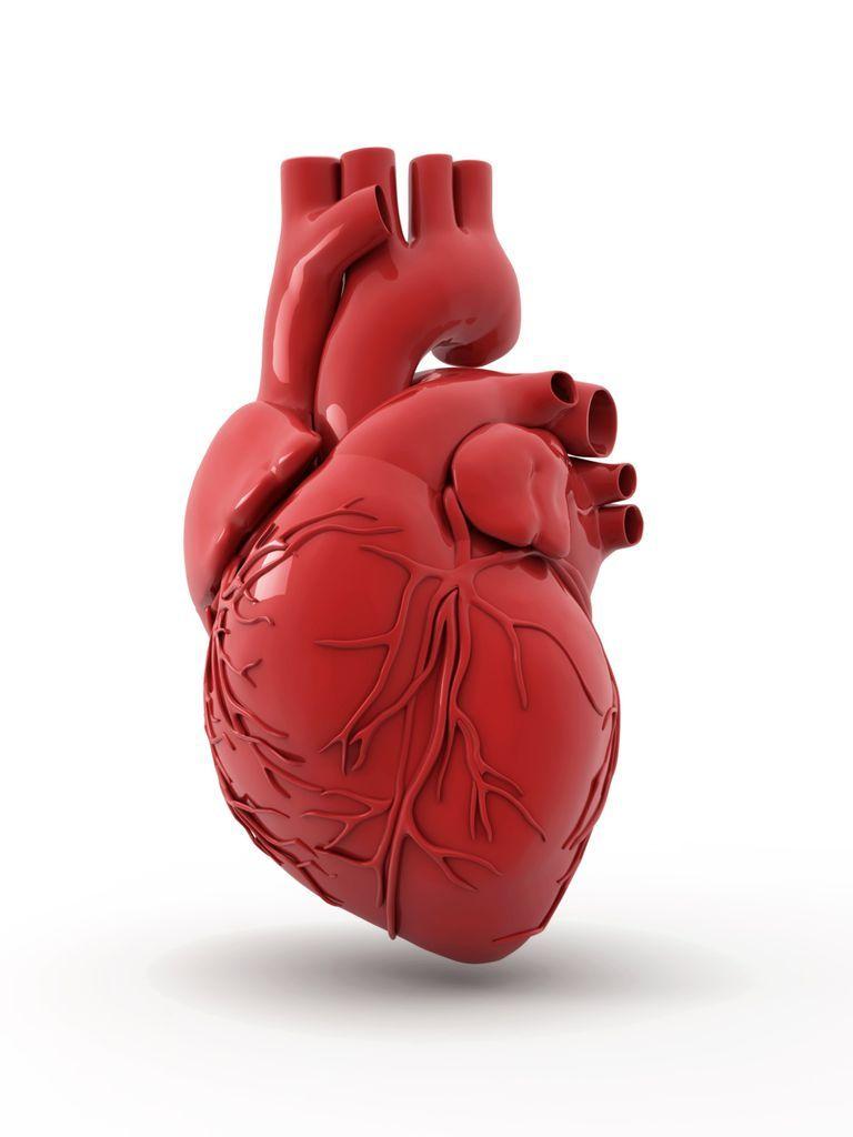las arterias coronarias, anatomia de las arterias coronarias ...