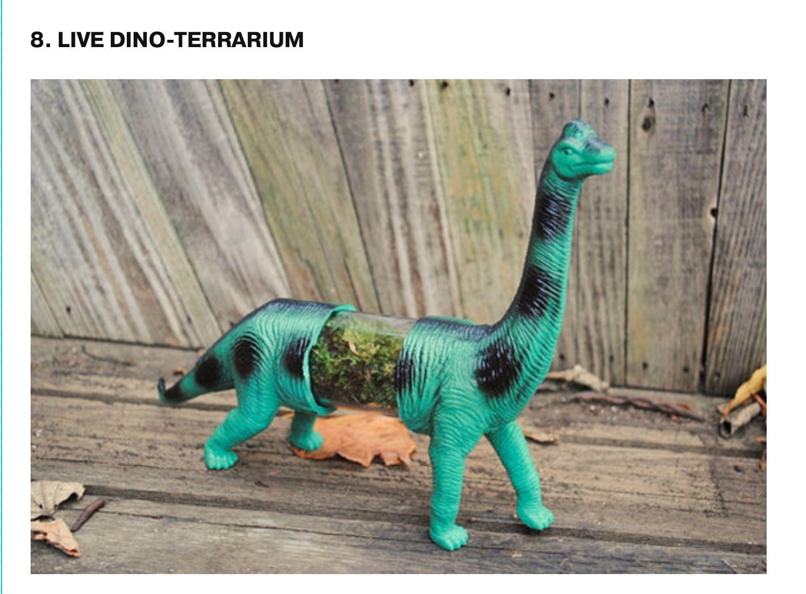 Mini terrarium Mini terrarium, Animals for kids, Low