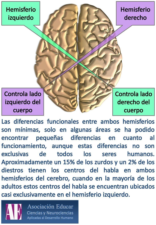 Asociación Educar - Ciencias y Neurociencias aplicadas al Desarrollo ...
