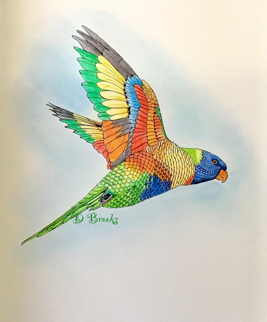 Rainbow Lorikeet From Birdtopia By Daisy Fletcher Black Pen