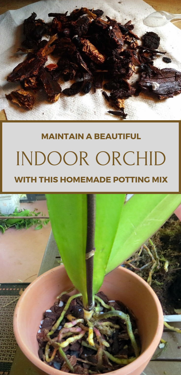 Maintain A Beautiful Indoor Orchid With This Homemade Potting Mix