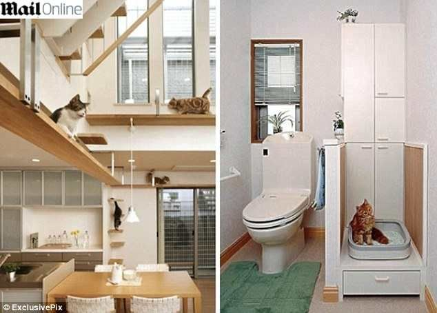 casa do gato - Pesquisa Google