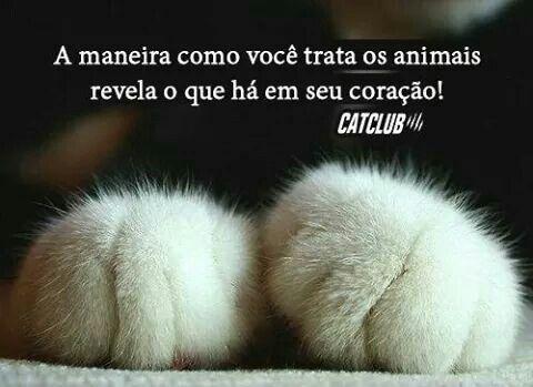 Pin Em Amor Animal