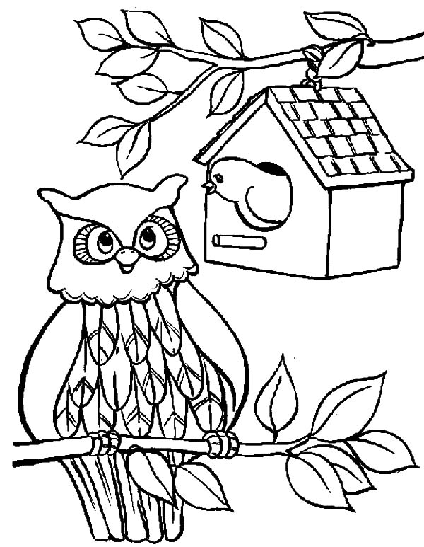An Owl Bird House Coloring Pages Best Place To Color Coloring Pages Bird Coloring Pages Free Coloring Pages