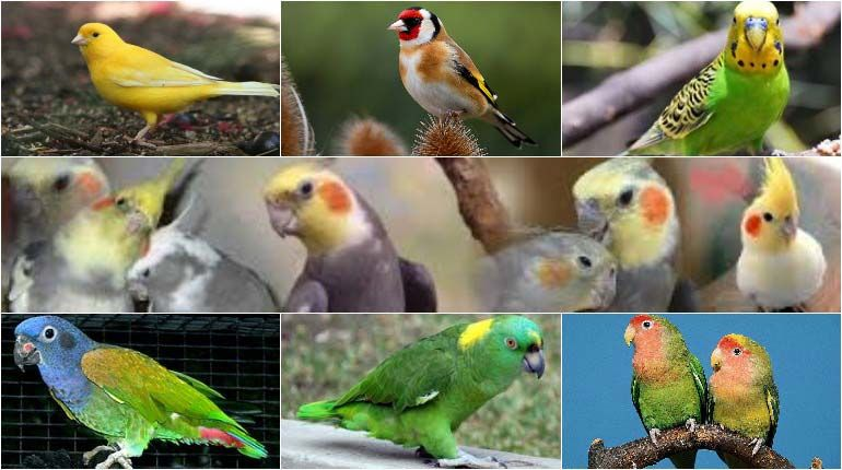 The Best Pet Birds For Beginners With Images Best Pet Birds