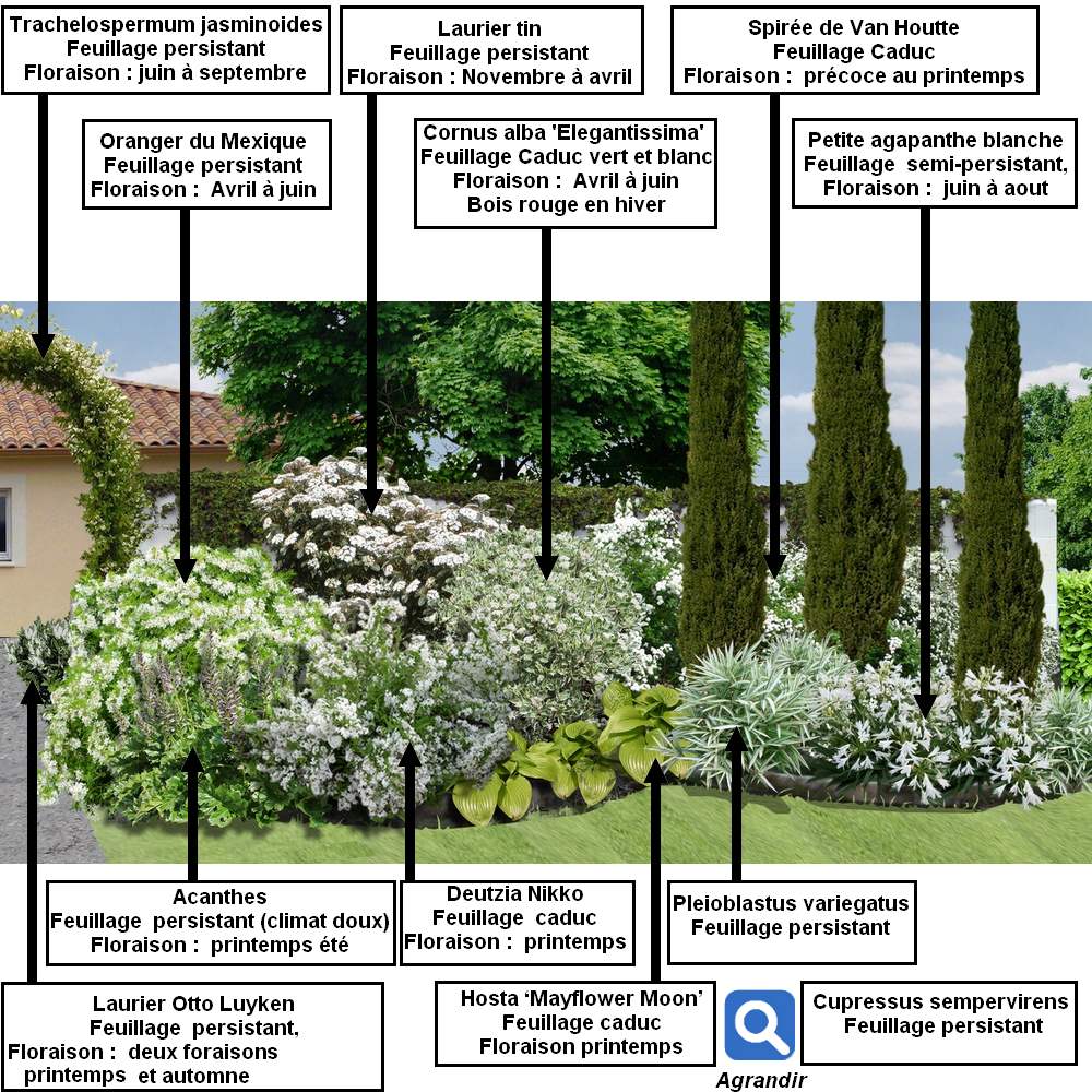 Cr er un massif d arbustes vert et blanc jardin for Creer massif jardin