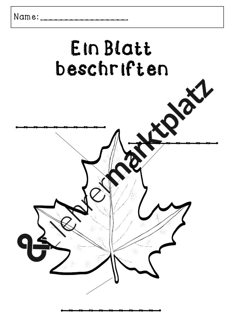 Laubbäume - Werkstatt ab Klasse 1 – Sachunterricht | Pinterest ...