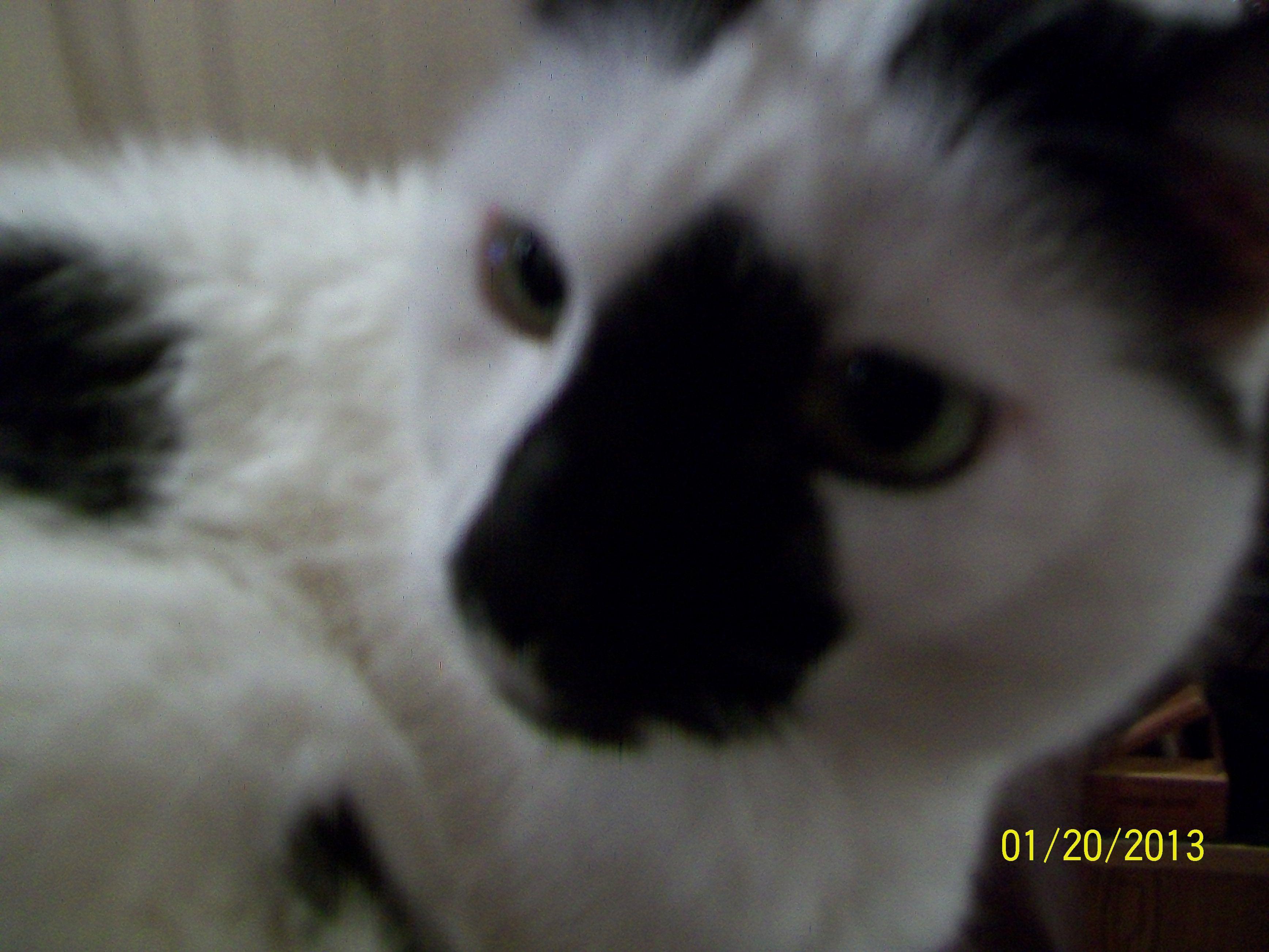 My Eartha Eartha Kitty Cats