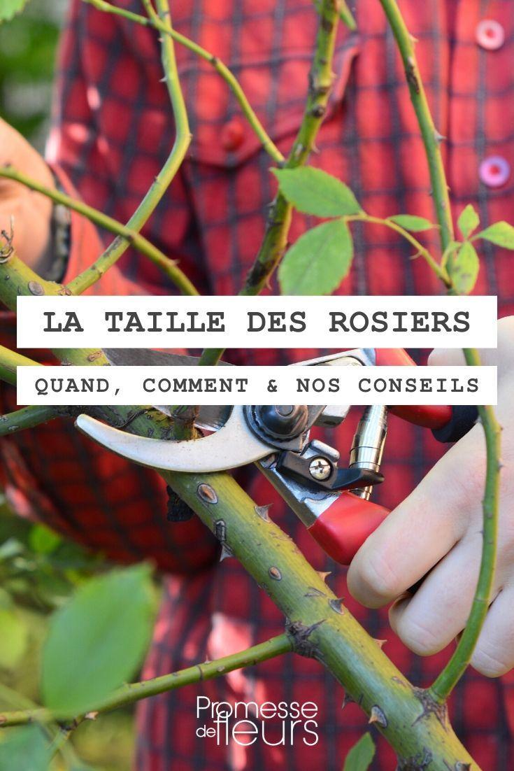 Epingle Sur Roses Rosiers
