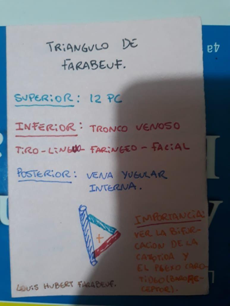 Donde se realiza la Cricostomia de emergencia? Triangulo de ...