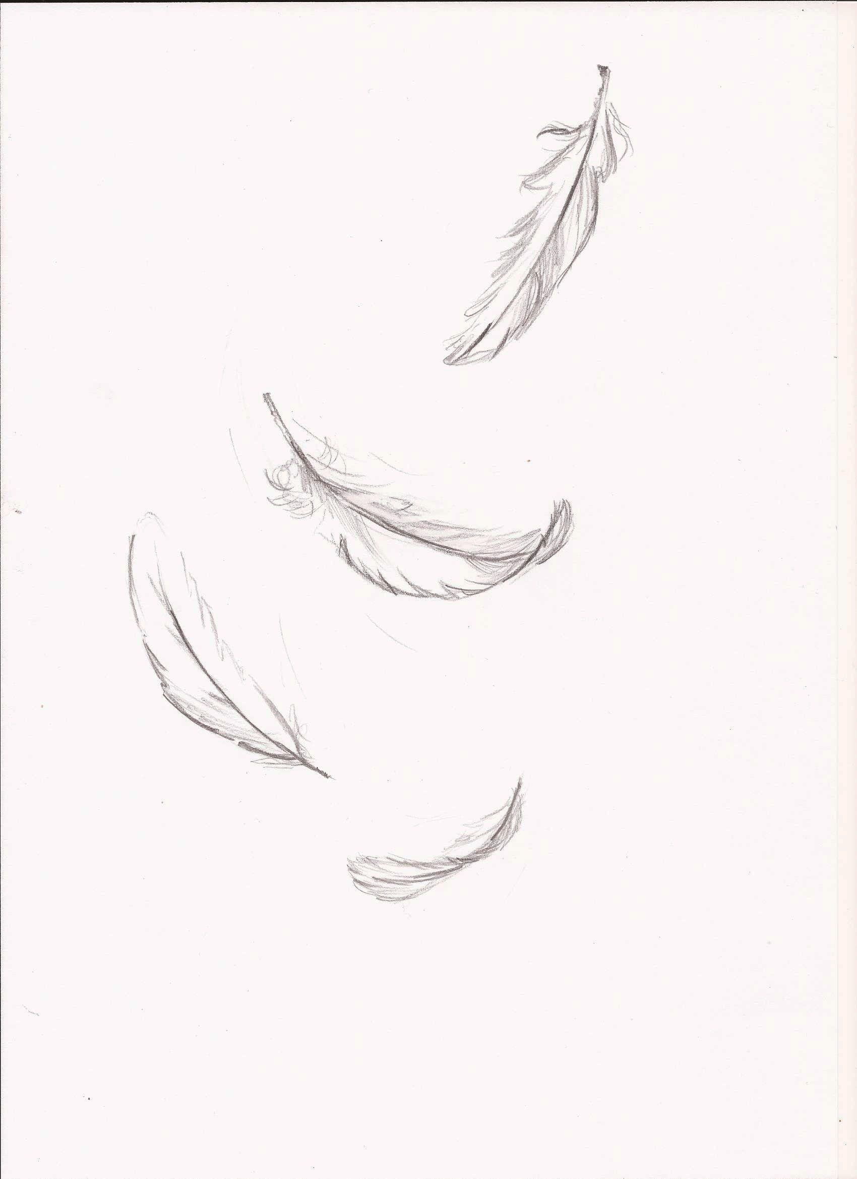 falling feather sketches google search feathers feather