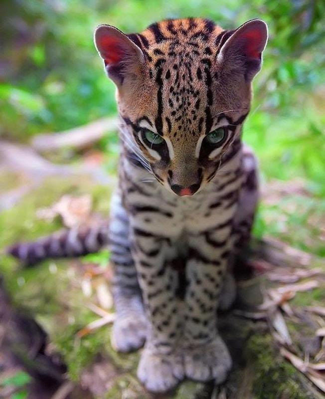 62 der faszinierendsten Tierfotos - je zuvor #kittycats