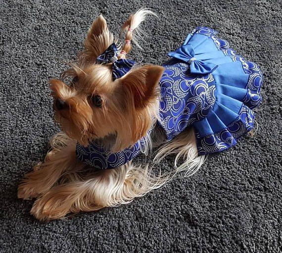 Perro vestido para perro pequeño del animal doméstico, ropa del ...