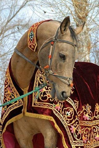 Royalty - empress of the equines?!