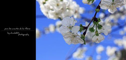 para los amantes de las flores