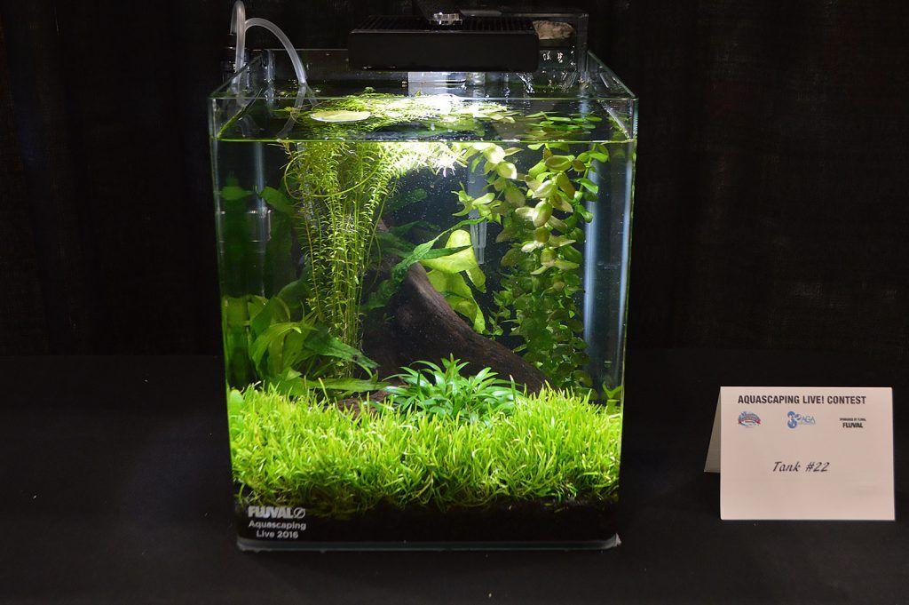Aga Aquascaping Live 2016 Small Tank Entry 22 Aquascape Aquascape Aquarium Small Plants