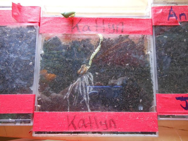 SEE-D grow seeds in a cd... better than a baggie :)