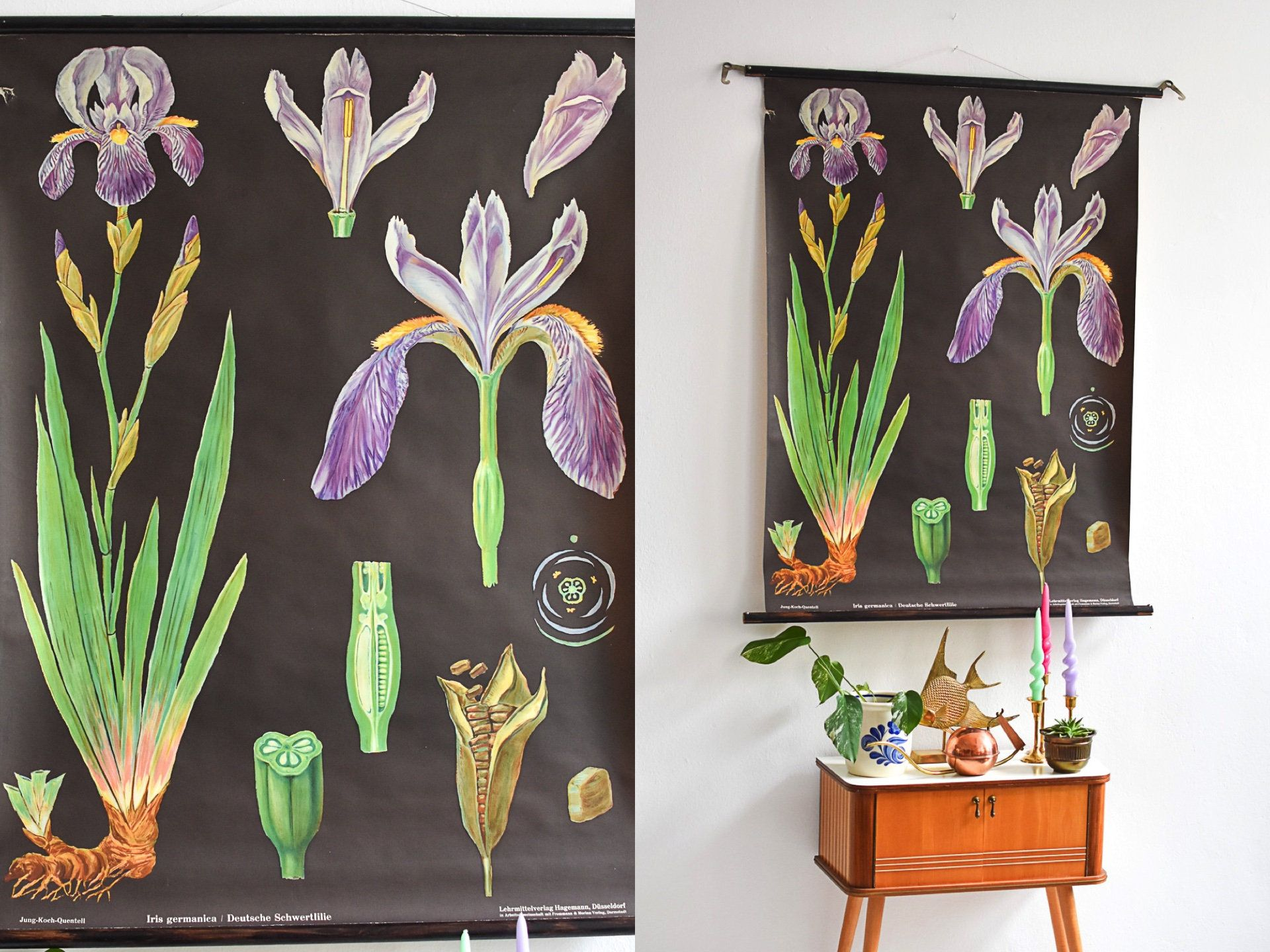 Botanical Print Botanical Posters Antique Botanical Prints