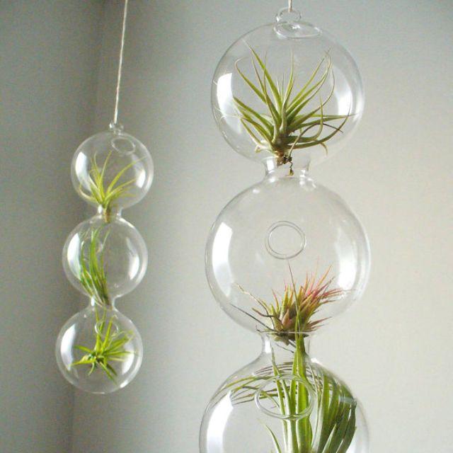 Beautiful Hanging Terrarium Products I Love Pinterest Hanging
