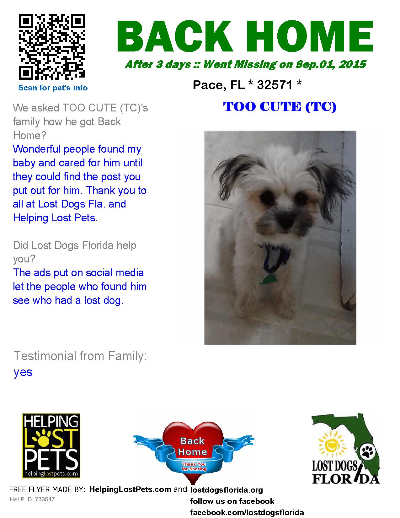 Lost Dog Shih Tzu Pace Fl United States 32571 Losing A Dog Losing A Pet Shih Tzu