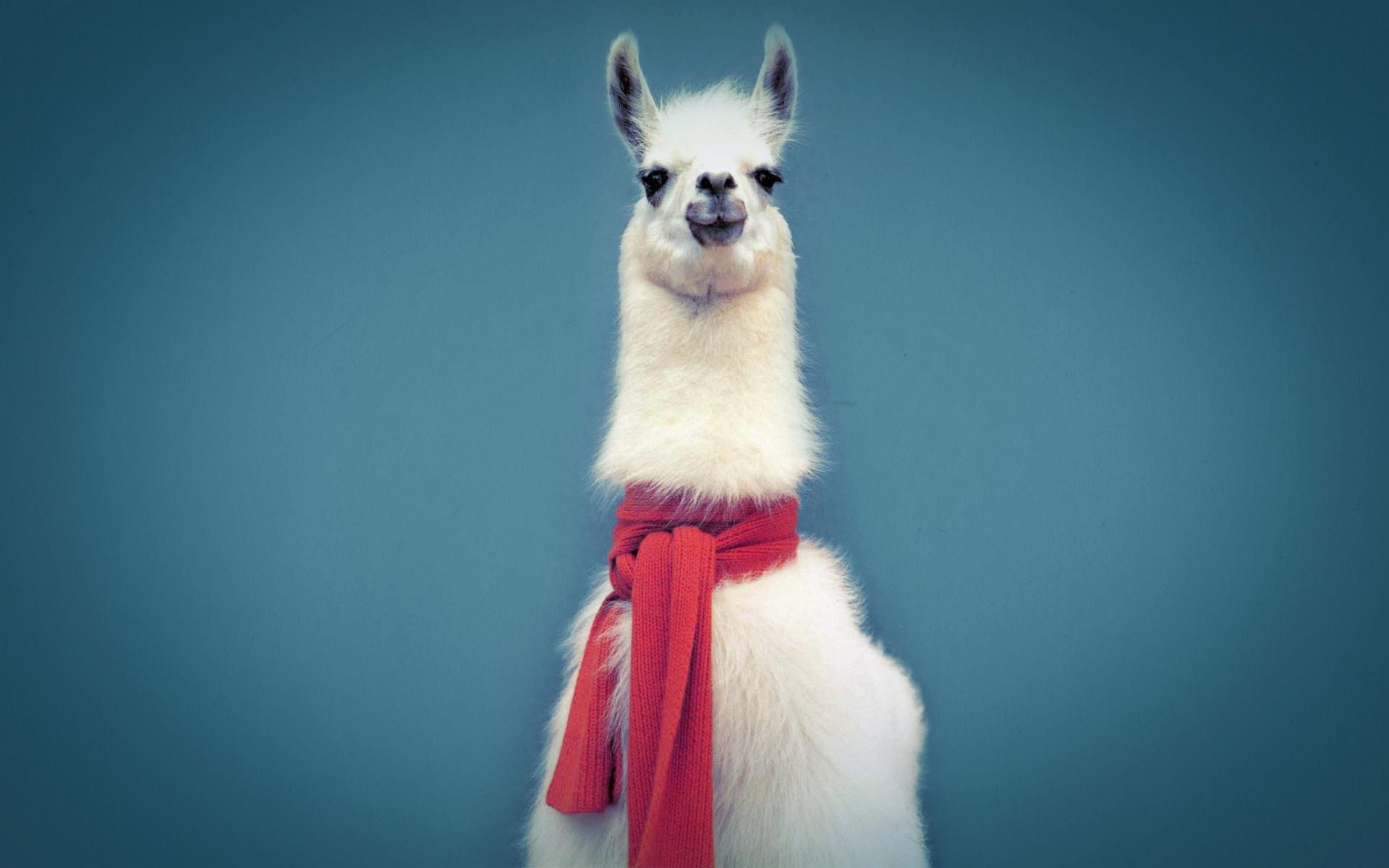 Dapper Hipster Llama In A Sexy Scarf