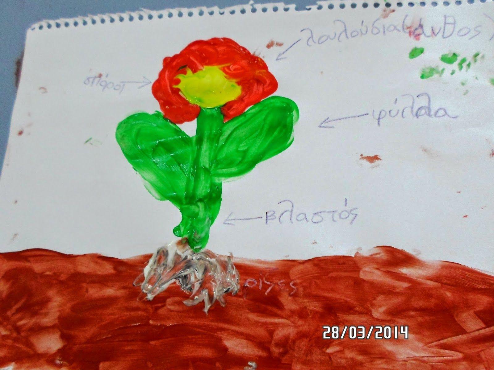 Τάξη αστεράτη: Τα φυτά: Οι ανάγκες, τα μέρη τους και η φωτοσύνθεση - Τα μέρη του φυτού