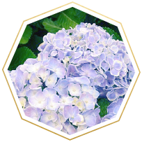 Flower Meanings And Symbolism Ftd Com Flower Meanings Most Popular Flowers Popular Flowers