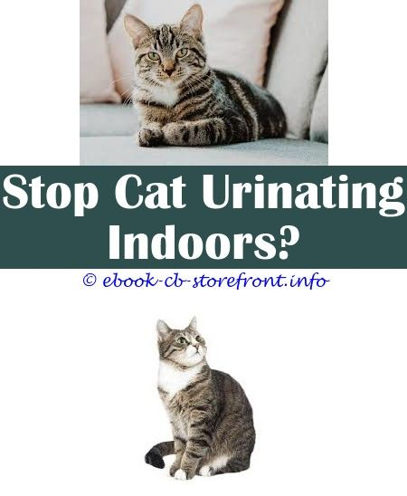 3 Desirable Tips And Tricks When I Pet My Cat She Sprays Why When
