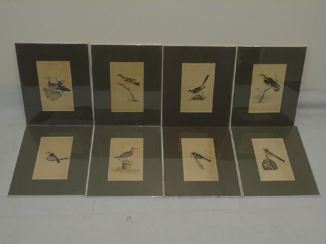Set of 8 Matted Antique Ornithological Bird Prints