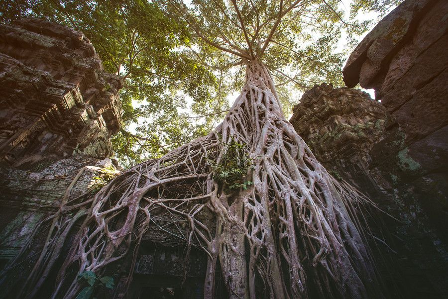 Roots in Angkor - Cambodia by Galdric Pons on 500px