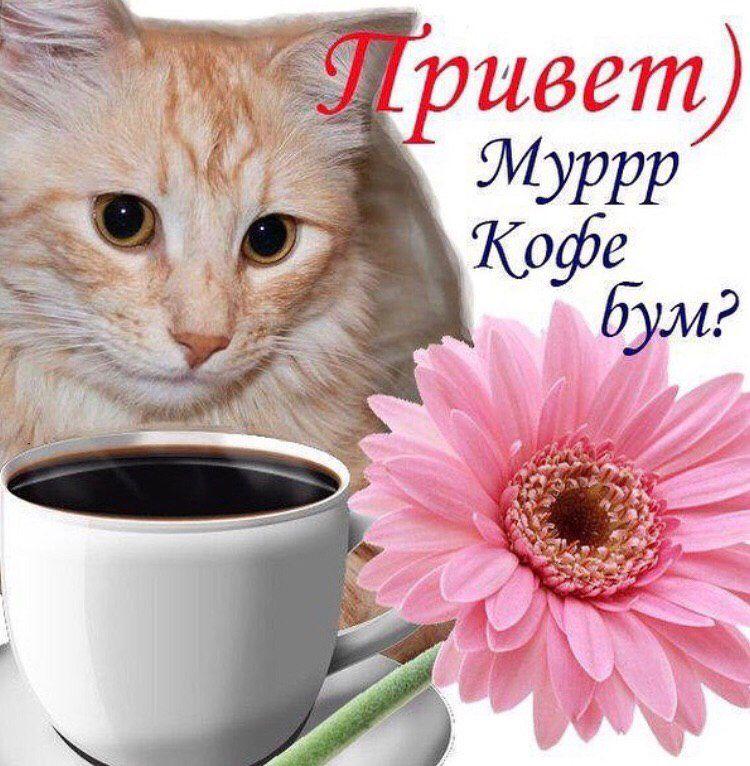 Доброе утро картинки котята удачного дня