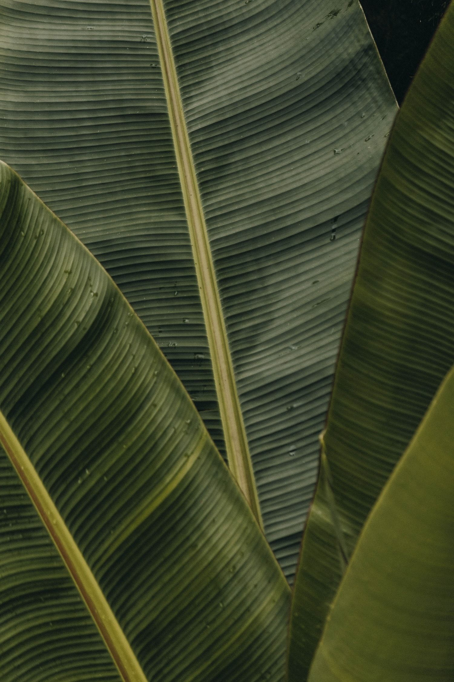 Design Visual Leaf Photography Leaf Texture Green Aesthetic