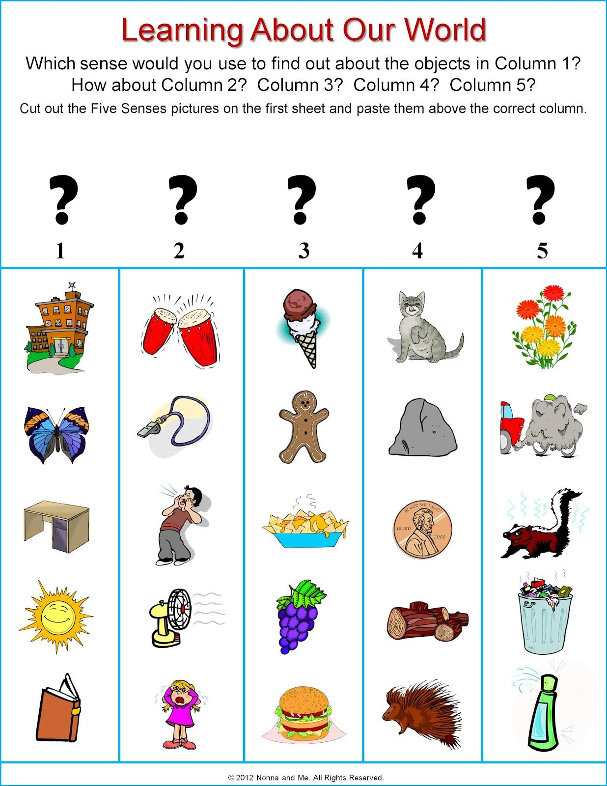 1st Grade Science The Five Senses
