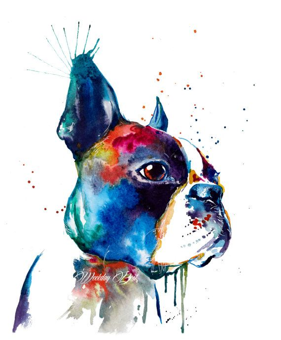 Colorful Watercolor Boston Terrier Art Free Shipping With