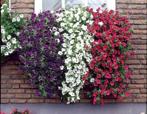 World Is More Beautiful With Plants In Window Boxes Window Box