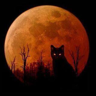 (Harvest Moon)