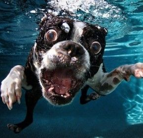 Funny Dog Faces Underwater Funny Dog Faces Underwater Dogs Dog