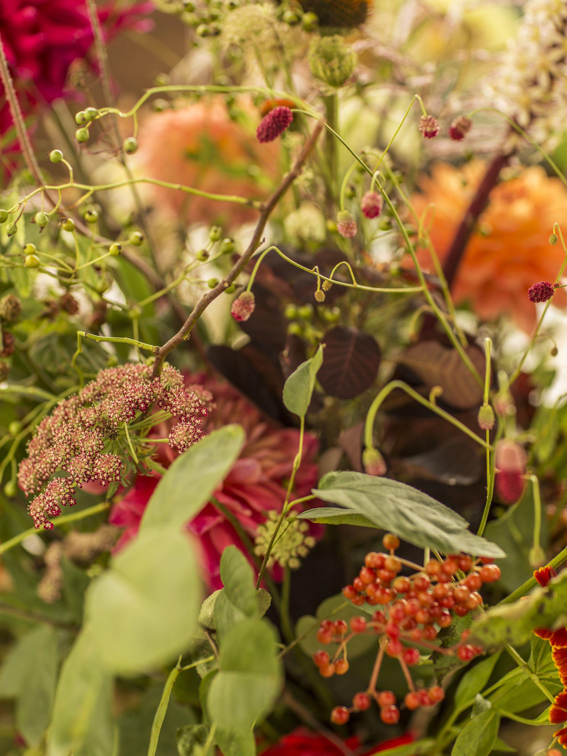 Tant de jolies choses cres par la nature autumn beautiful tant de jolies choses cres par la nature autumn beautiful flowers izmirmasajfo