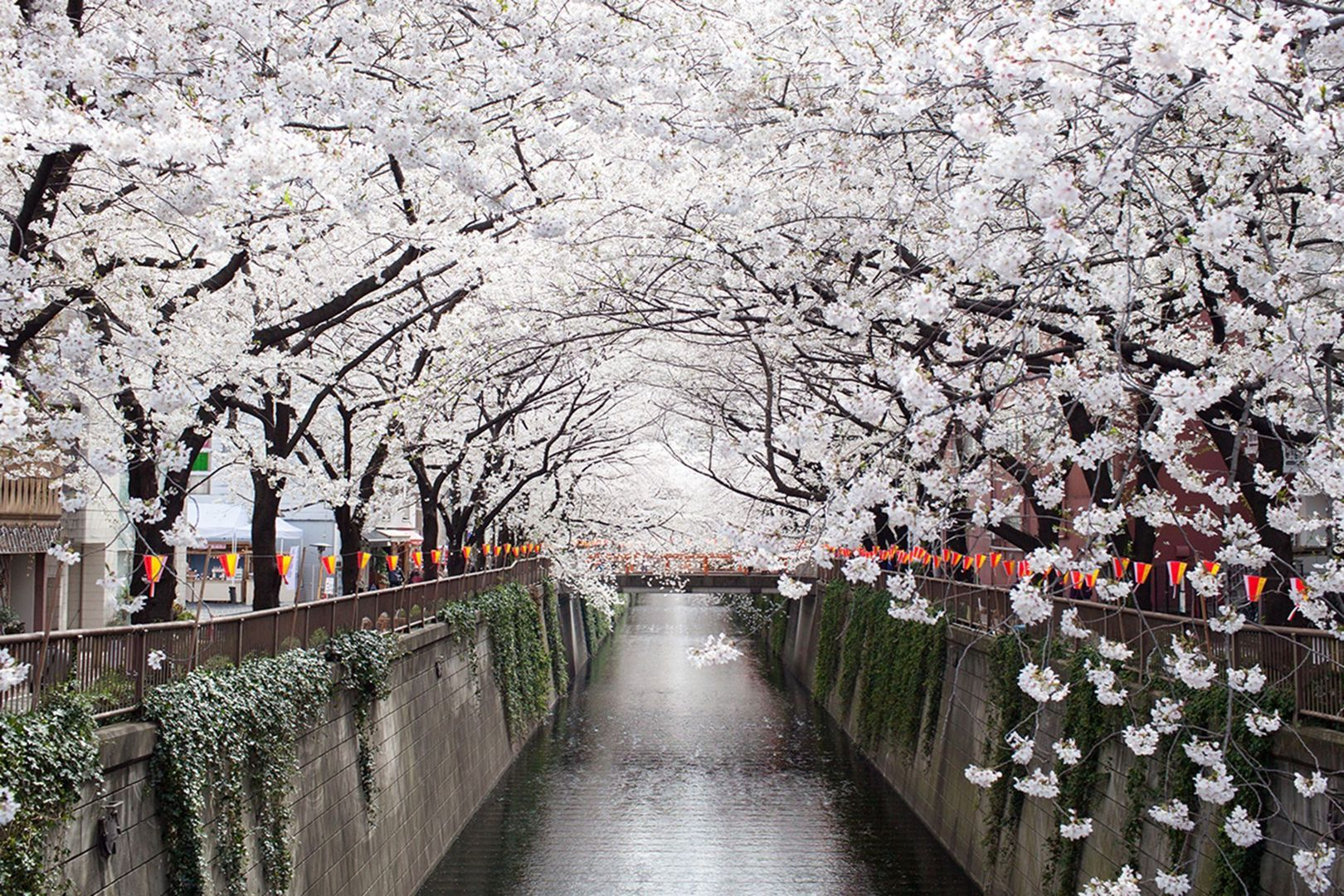 Where To See Japan S Famous Cherry Blossom Beautiful Places In Japan Most Beautiful Places Tree Tunnel