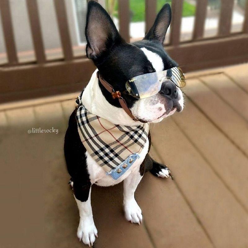 Fashion Dog Bandana Necklace Dog Bandana Dog Collar Bandana Dogs