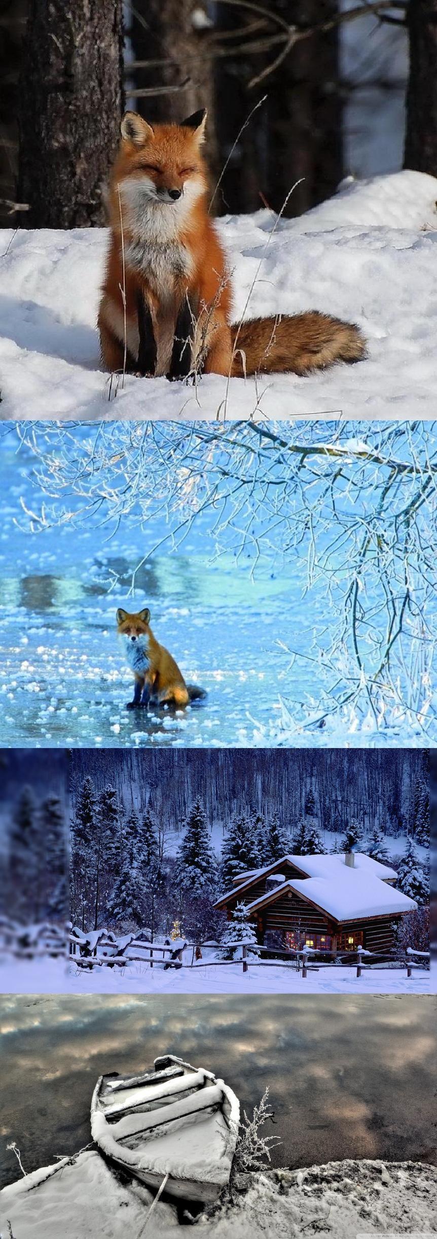Fox in winter winter squirrel