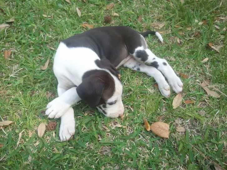 Craigslist Clarksville Tn Free Dog S Innovaide Free Dogs