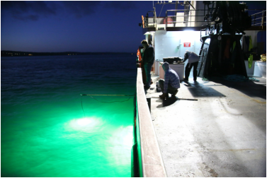Fish Attracting Lights