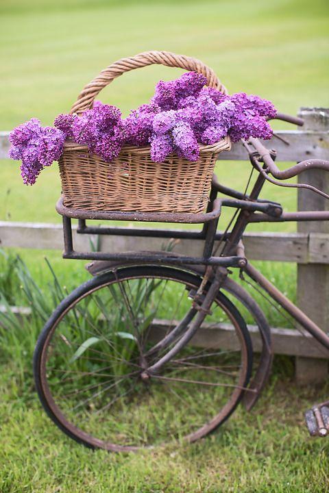 Pin by Zofia Katarzyna on Rowery i kwiaty | Rower, Kwiaty