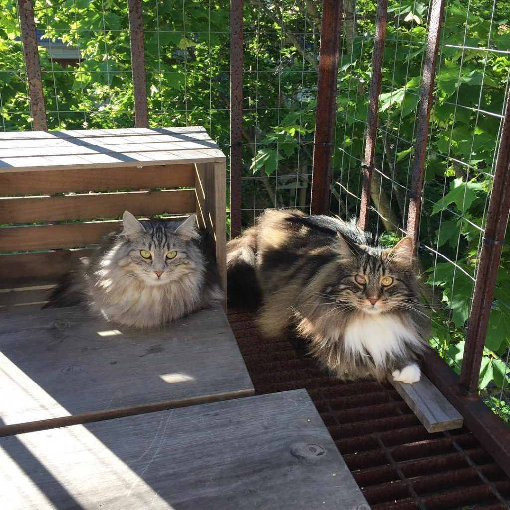 Catio Hacks Every Cat Owner Should Know Outside Cat Enclosure Adventure Cat Outdoor Cat Enclosure