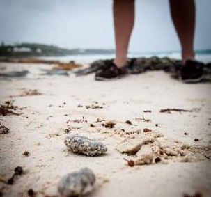 Grease Balls From Restaurant Grease Are Now Showing Up On The Beaches In Bermuda This Is Really Scary Grease Beach Photo