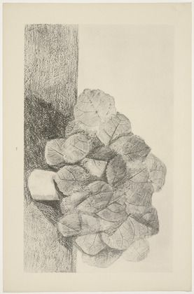 Max Ernst. Le tilleul est docile (The Lime Tree Is Docile) from Histoire Naturelle. 1926.  (Reproduced frottages executed c. 1925).