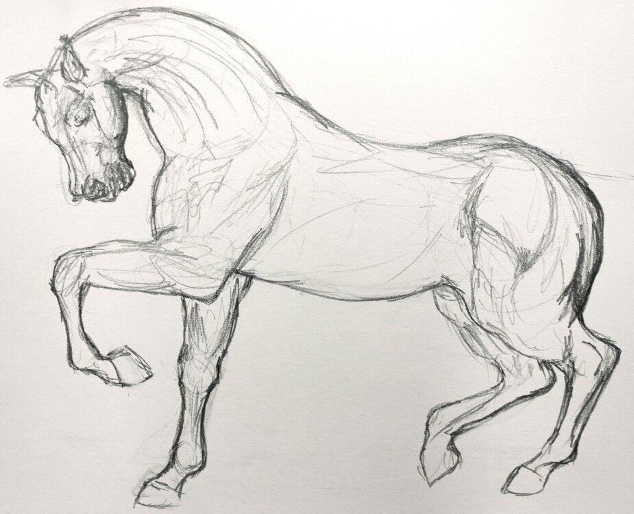 Basic horse structure   Çizim
